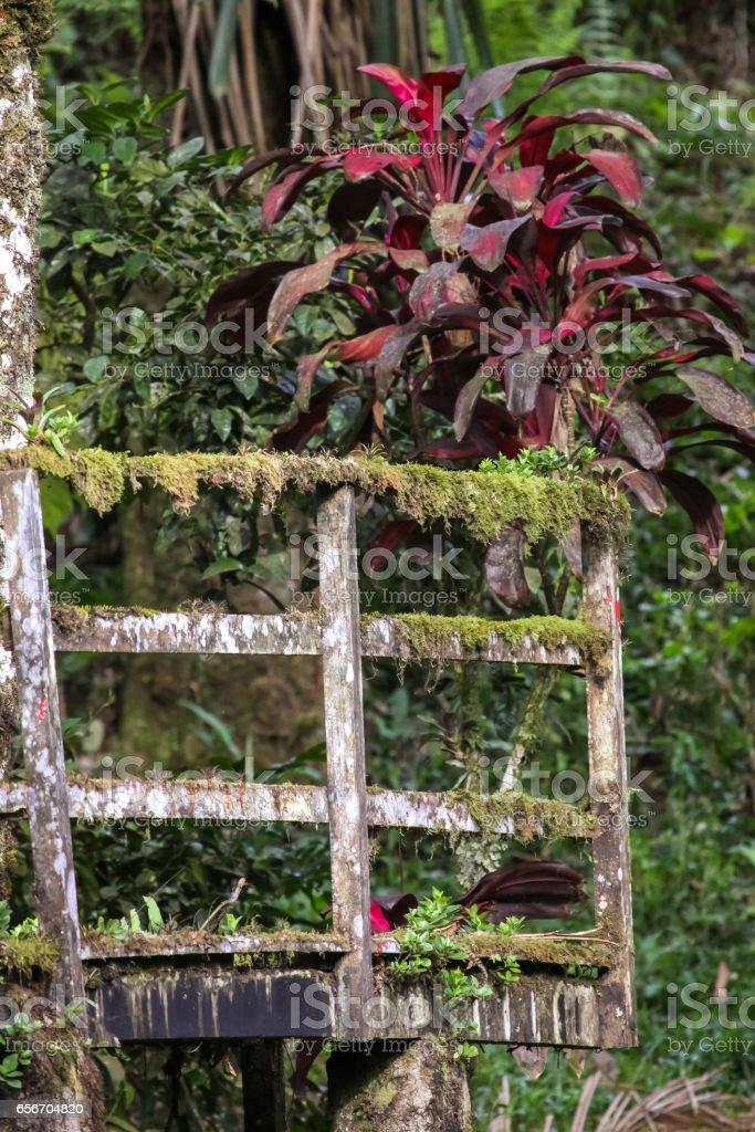 Rainforest plants covering remains of human impact, Mata atlantica stock photo