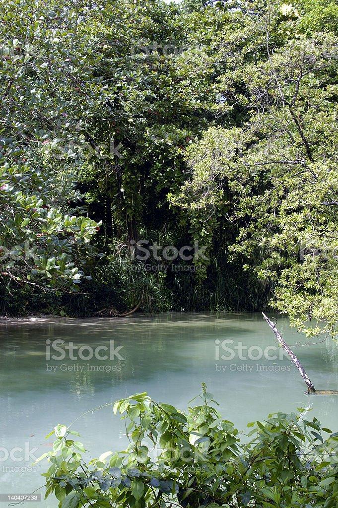Rainforest Rimmed Stream Jamaica stock photo