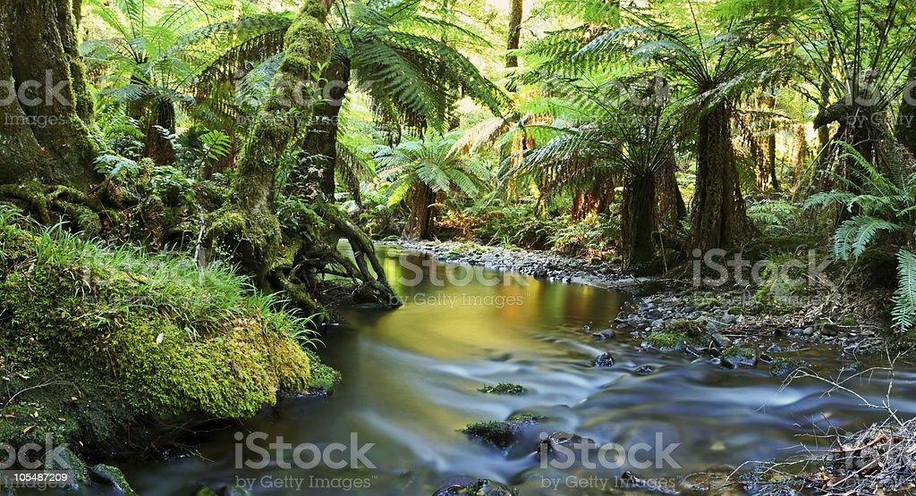 Rainforest River Panorama royalty-free stock photo