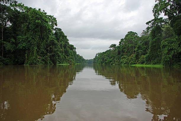 Rainforest river stock photo