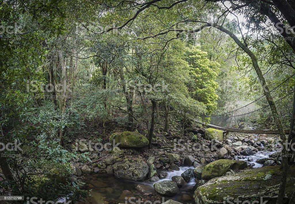 Rainforest, Riverbed and Footbridge below Minnamurra Falls, NSW, Australia foto