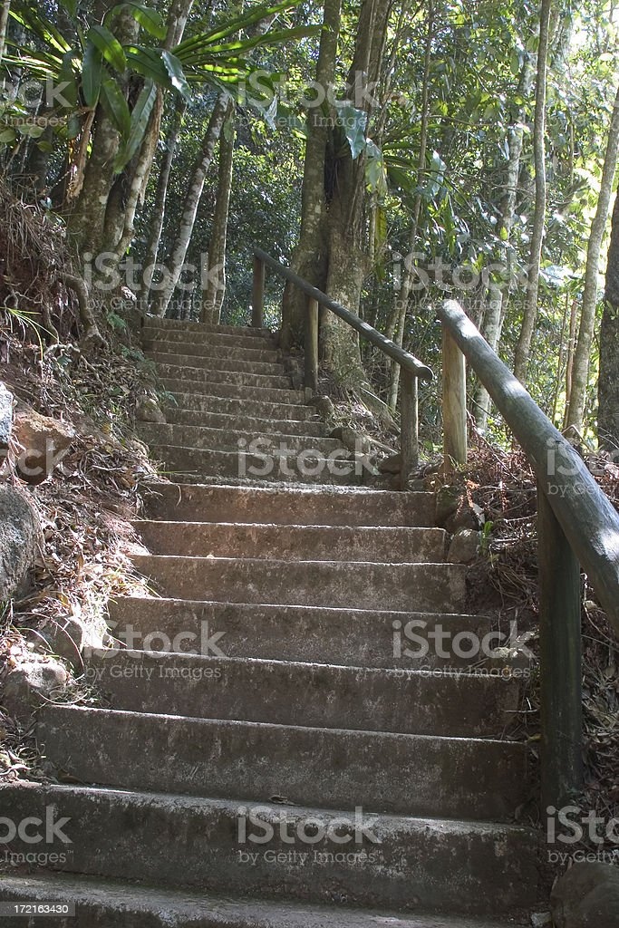 Rainforest Steps royalty-free stock photo