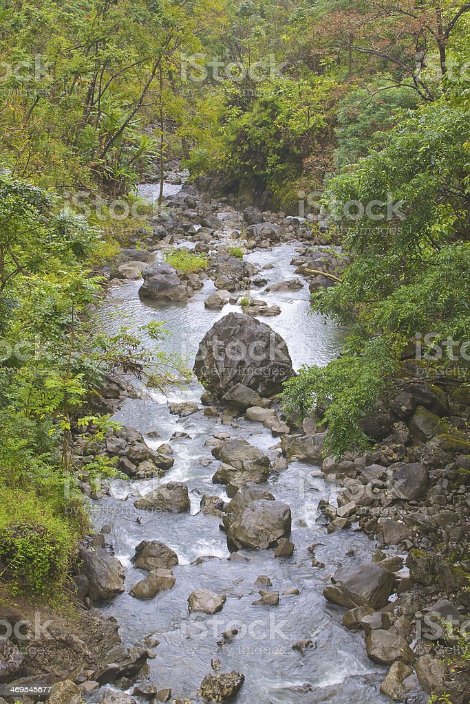 Rainforest Stream royalty-free stock photo