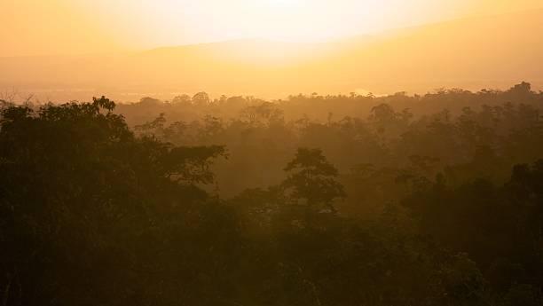 Rainforest Sunrise stock photo