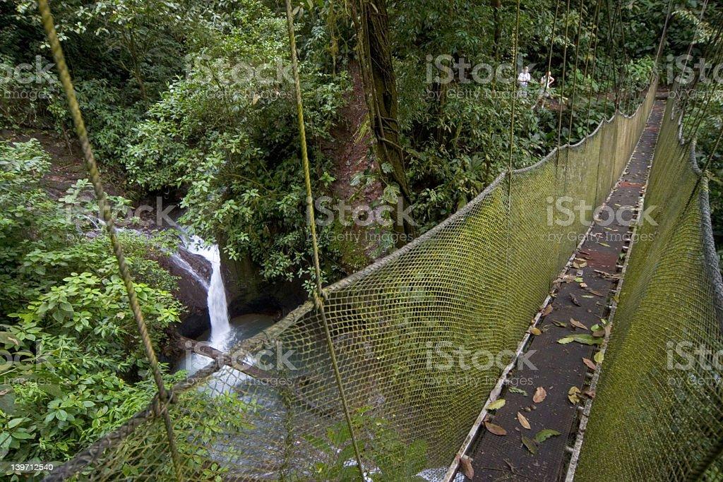 Rainforest suspension bridge royalty-free stock photo