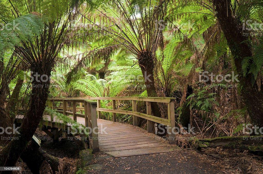 Rainforest Trail in Australia royalty-free stock photo