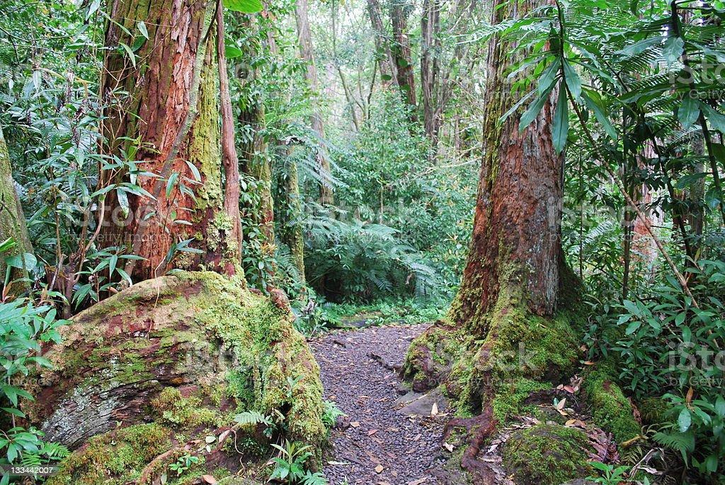 Trilha na floresta tropical - foto de acervo