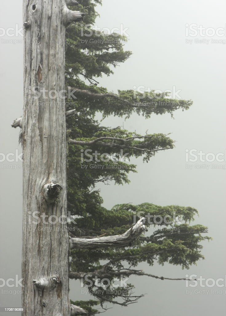 Rainforest Tree Branch Fog royalty-free stock photo