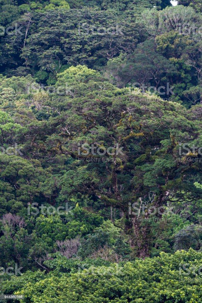 rainforest vegetation stock photo
