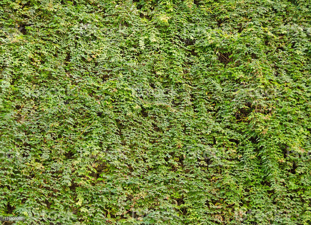 Rainforest Vines Background royalty-free stock photo