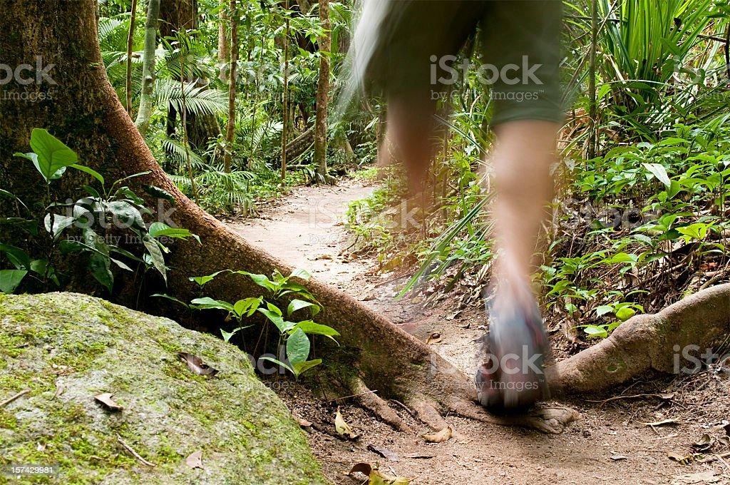 Rainforest Walking royalty-free stock photo