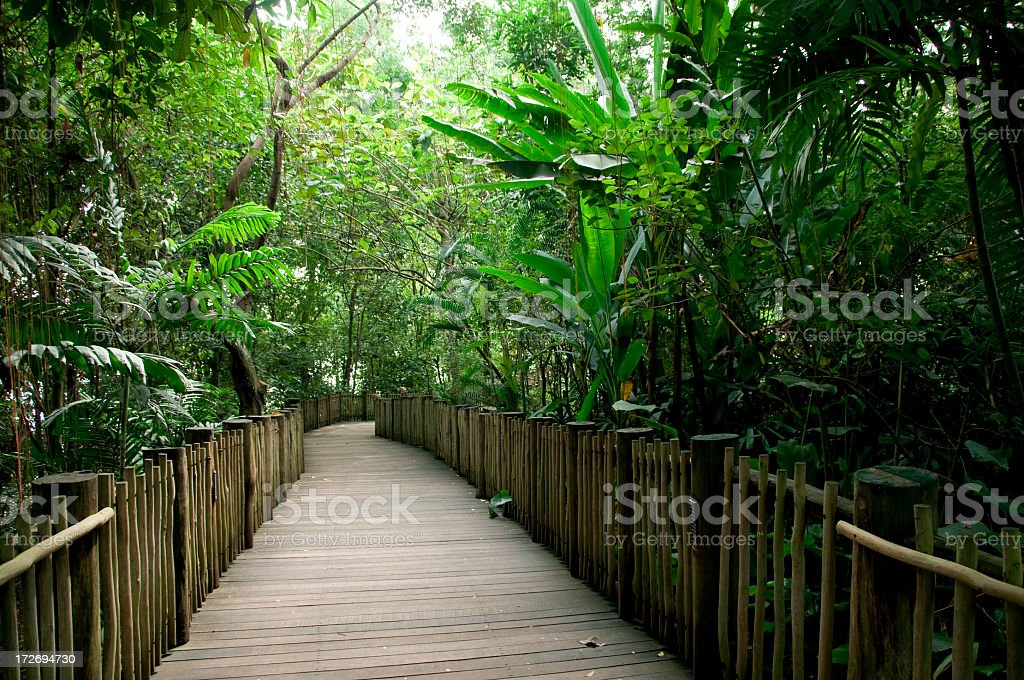 Rainforest Walkway royalty-free stock photo