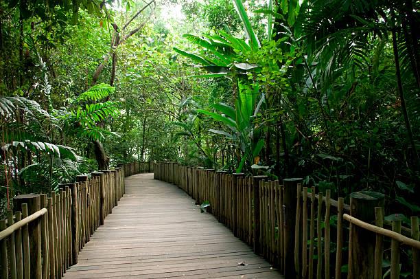 regenwald-fußgängerweg - baumwipfelpfad stock-fotos und bilder