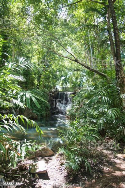 Photo of Rainforest Waterfall
