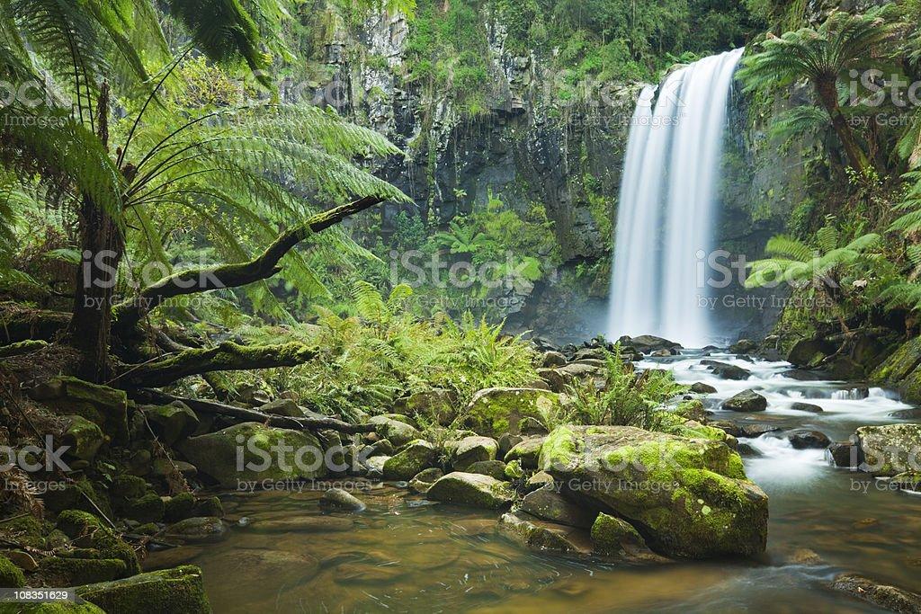 Тропический водопады, Водопад Хоптаун Фолс, огромный Otway НП, Виктория, Австралия - Стоковые фото Great Otway National Park роялти-фри