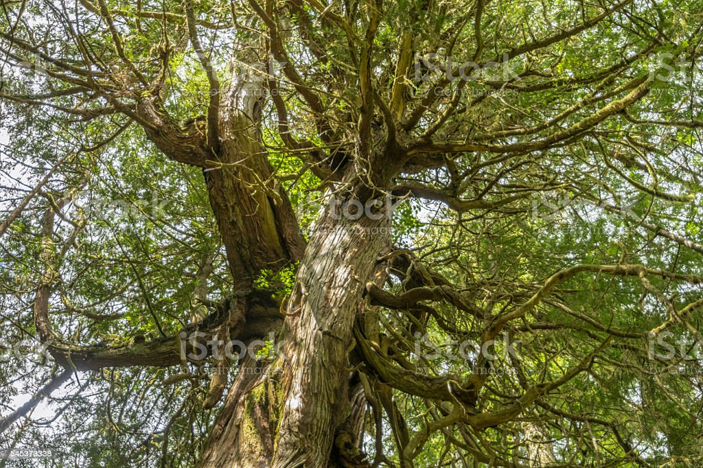 Rainforest, zoom on tree canopy from below stock photo