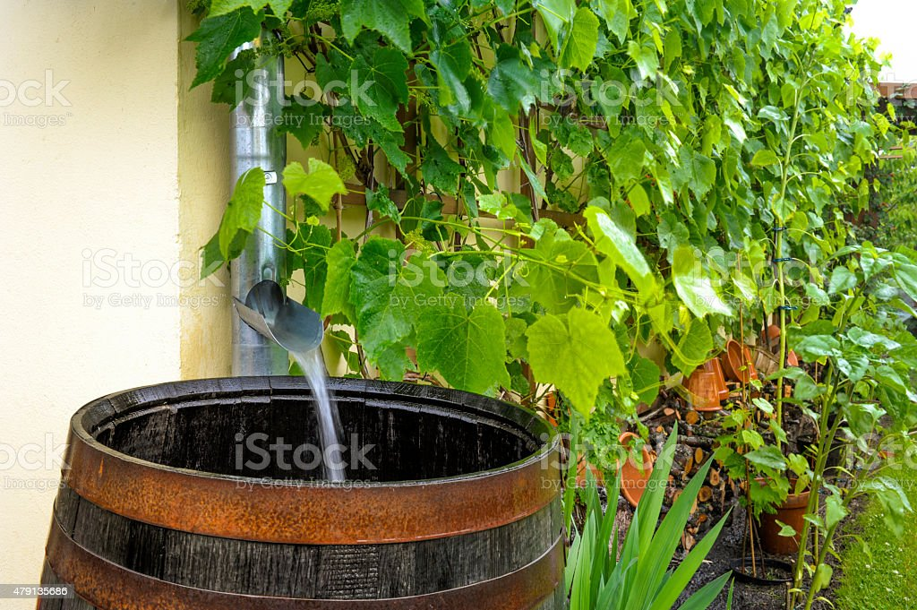 Rainwater runs into the water barrel stock photo