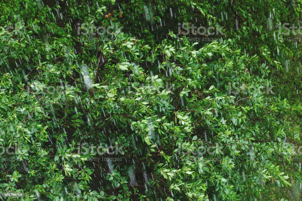 Rainy and windy weather. royalty-free stock photo