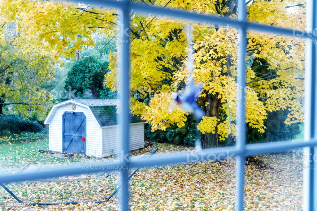 de21f5b9c81 Rainy Autumn Day Sugar Maple Tree Leaves Through Bay Window royalty-free  stock photo