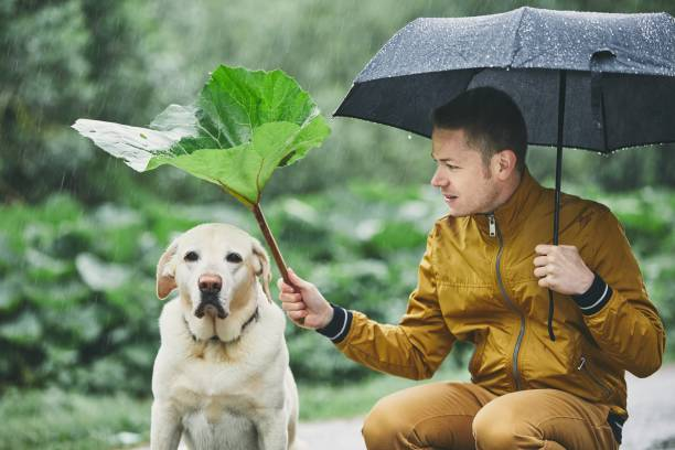 regentag mit hund in der natur - regenzeit stock-fotos und bilder