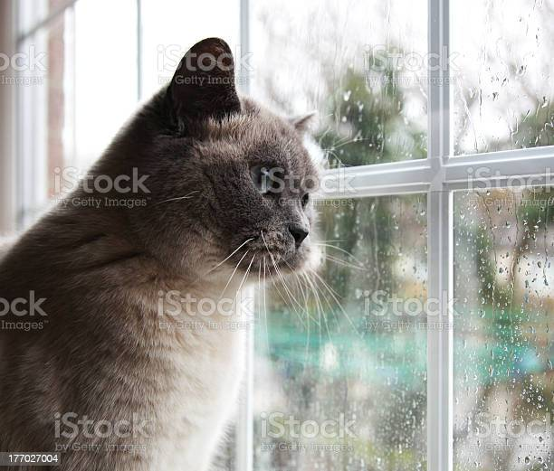 Rainy days picture id177027004?b=1&k=6&m=177027004&s=612x612&h=euyhu4cazuxwt4wwcxdsjt yjhliecuwyhrgs 8fado=