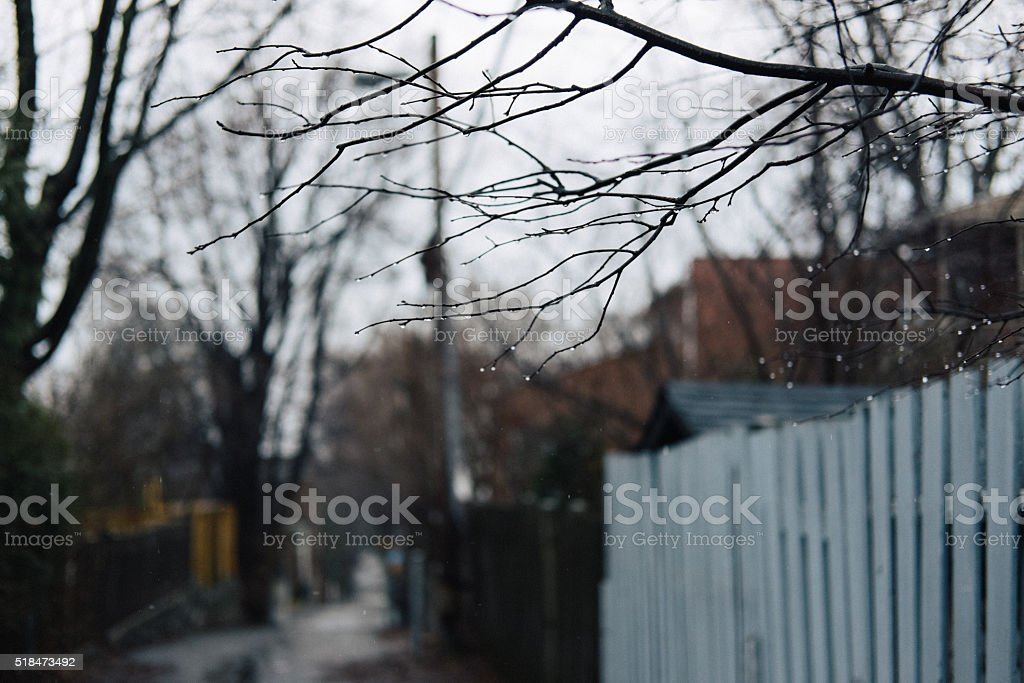 Rainy drops on branches stock photo