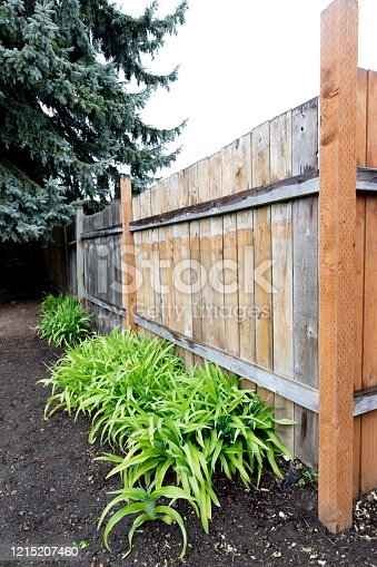 Daylily's at the base of a rainy fence.