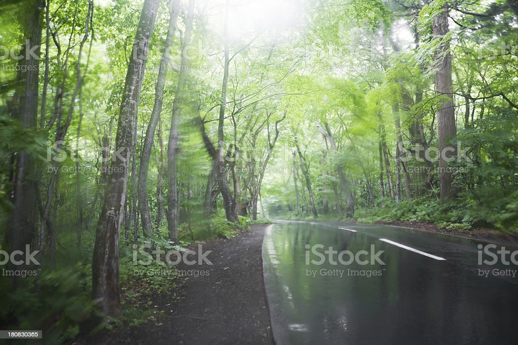 Rainy Forest Road royalty-free stock photo
