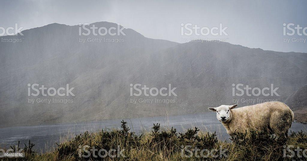 Rainy Ireland stock photo
