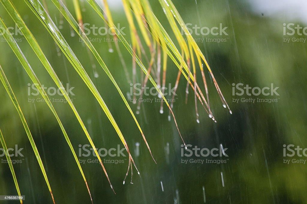 Rainy royalty-free stock photo