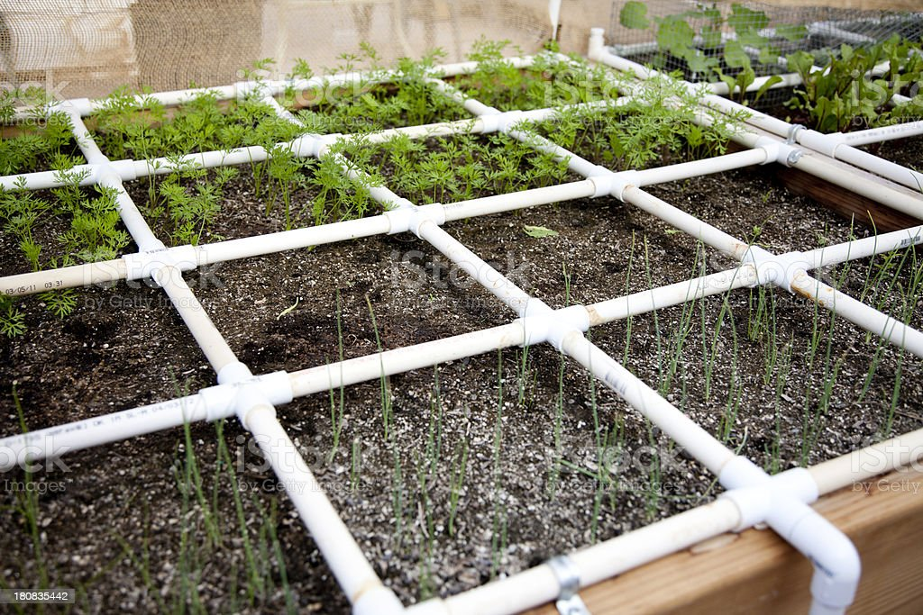 Raised Bed Garden With Watering System Stock Photo More Pictures Of Carrot Istock