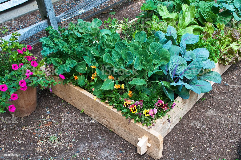 Raised Bed Gardening royalty-free stock photo