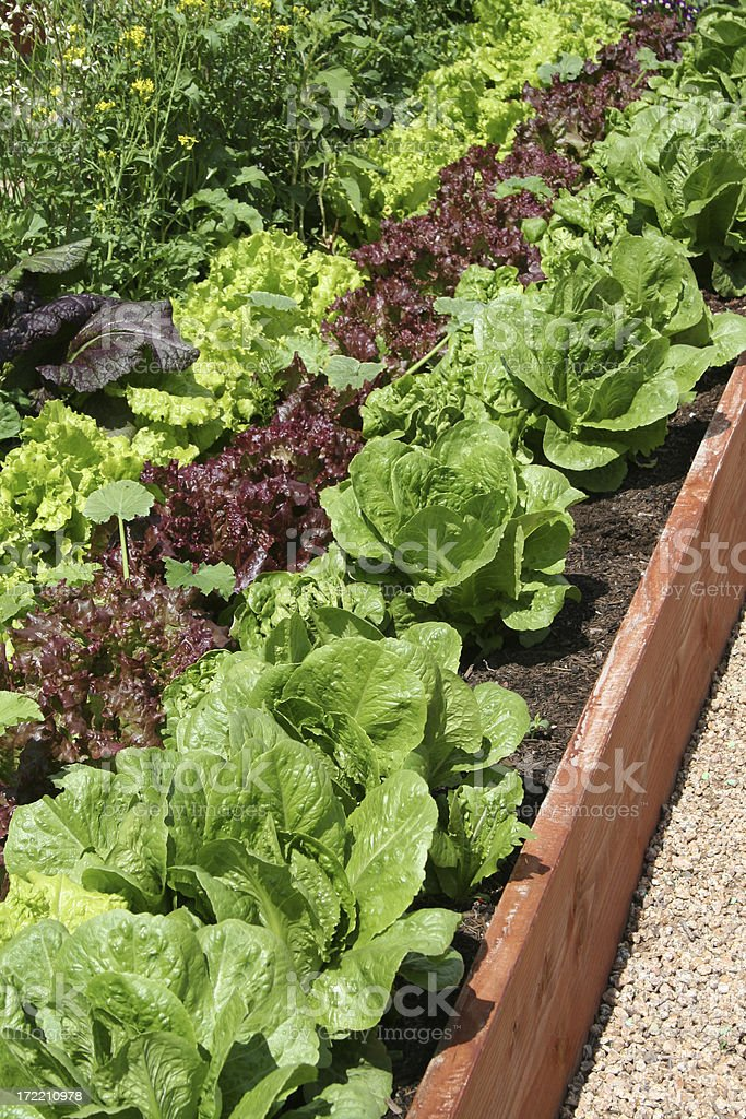 Raised Bed Vegetable Garden royalty-free stock photo