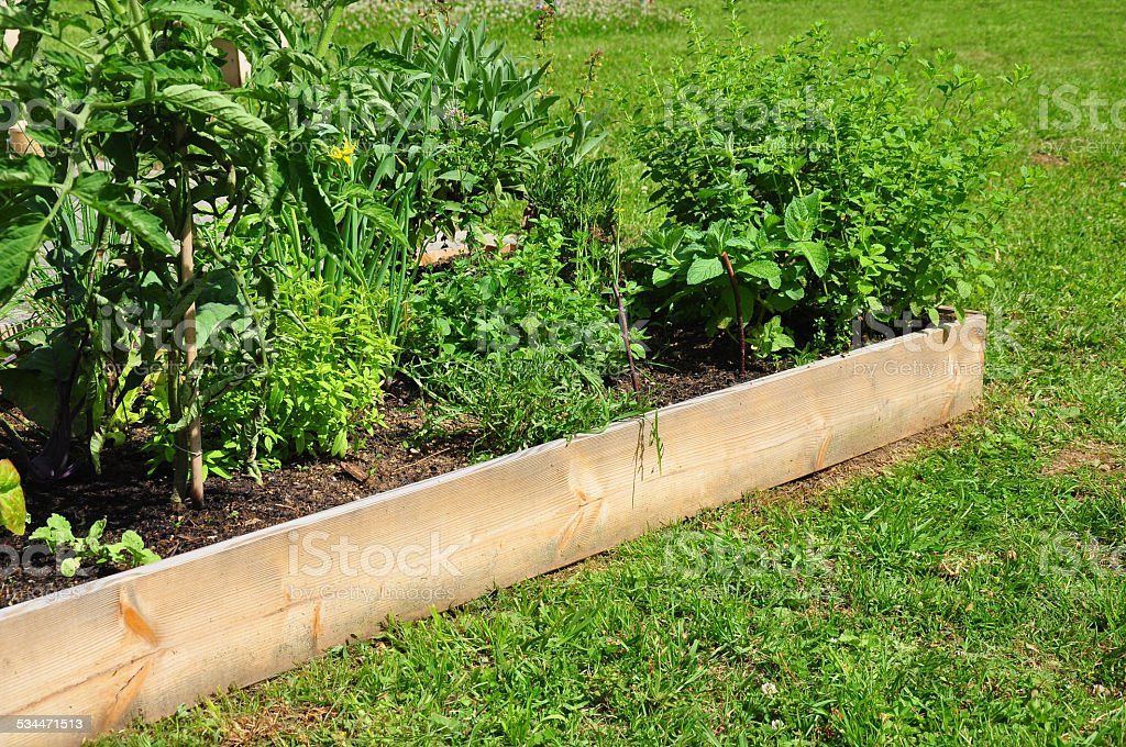 Raised bed with herbs stock photo