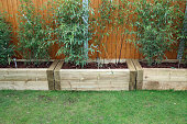 istock Raised beds made with railway sleepers and planted with bamboo privacy screening 1311818643