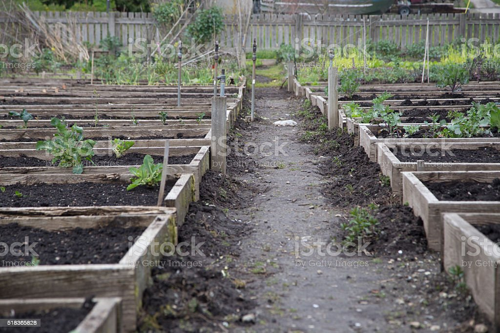 Raised Pea Patch Beds stock photo