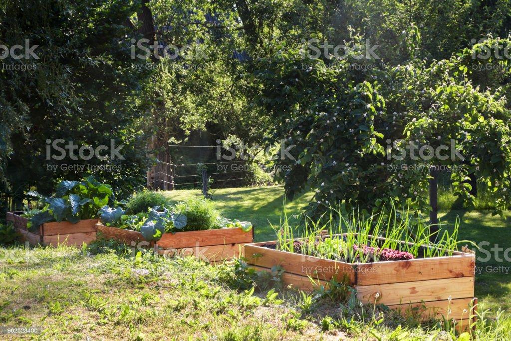 levantadas camas vegetais de madeira em um jardim de país rural, cópia espaço - Foto de stock de Agricultura royalty-free