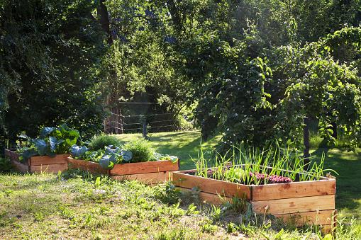 Foto de Levantadas Camas Vegetais De Madeira Em Um Jardim De País Rural Cópia Espaço e mais fotos de stock de Agricultura