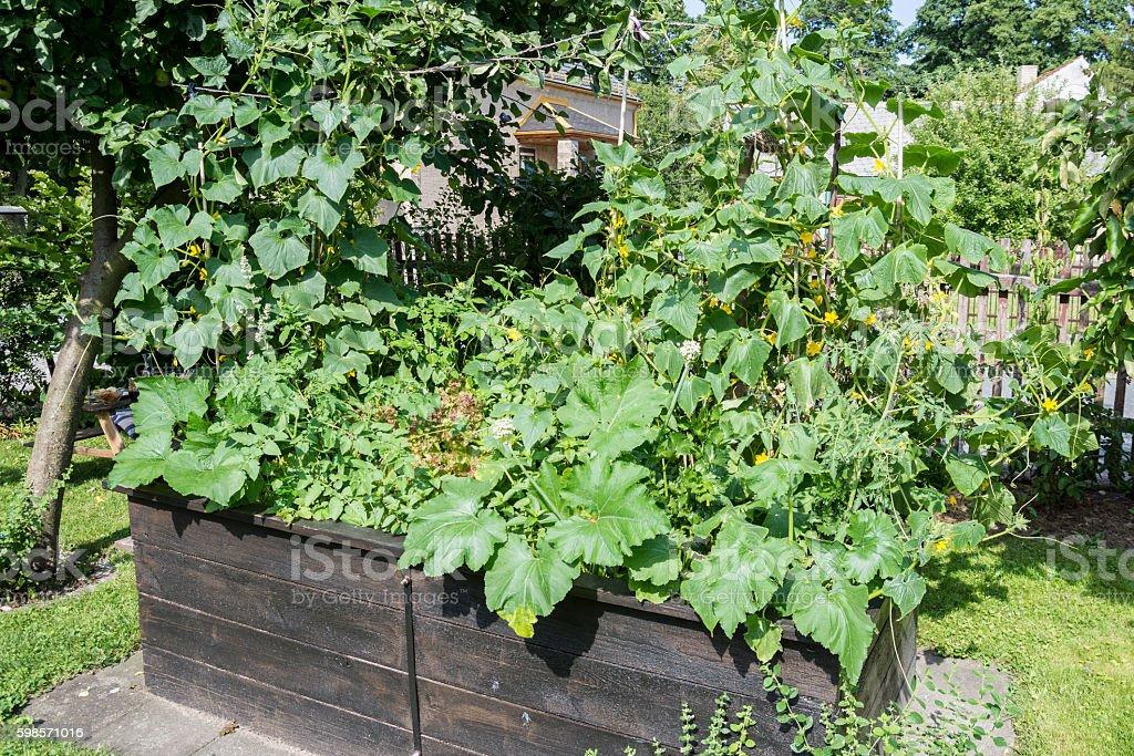 Raised-bed gardening stock photo