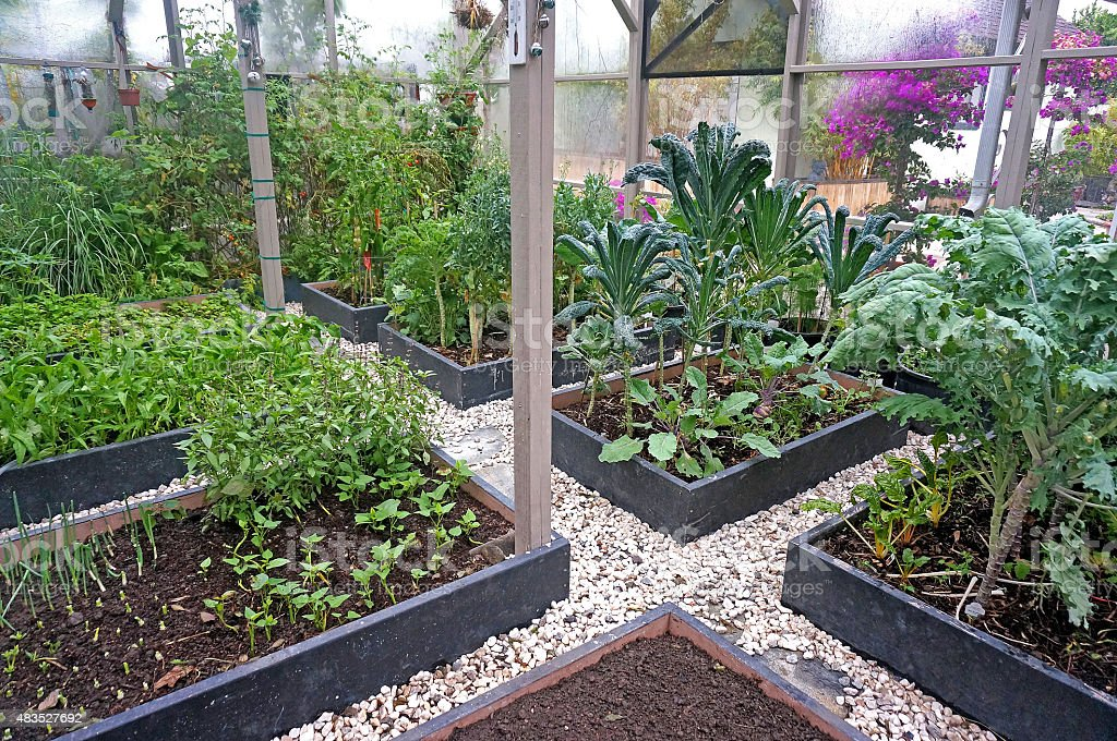 Raised-Bed Organic Vegetable Garden stock photo
