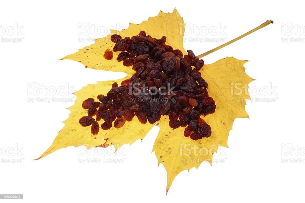Raisin in the maple Leaf royalty-free stock photo