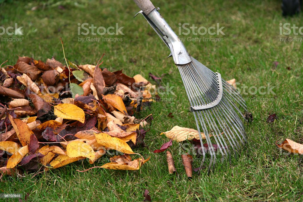 A rake and a pile of browned leaves royalty-free stock photo