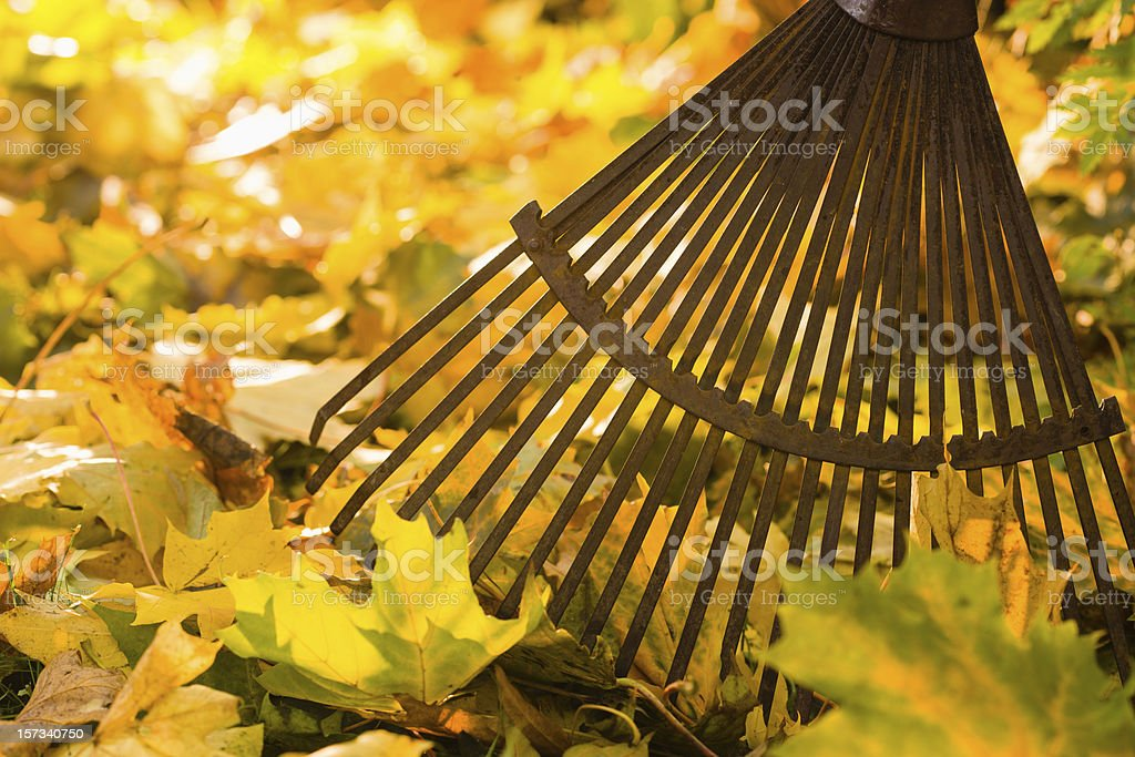 Rake and leafs stock photo