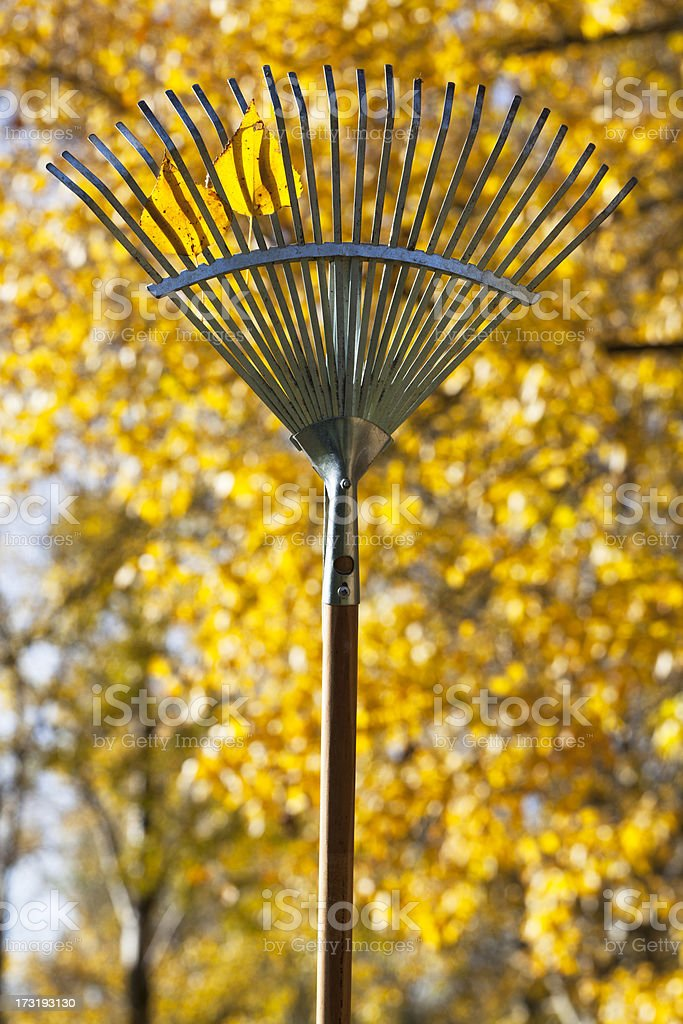 Rake in front of foliage stock photo