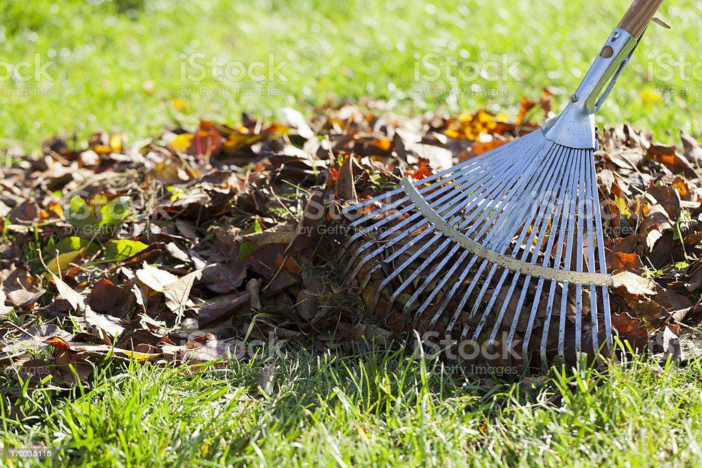 Rake, Leaves on Grass in Garden stock photo