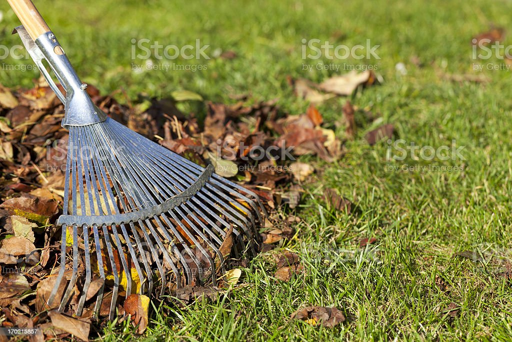Rake, Leaves on Grass in Garden stock photo