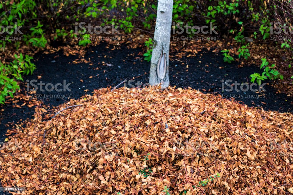 Raked leaves in a pile under a tree stock photo