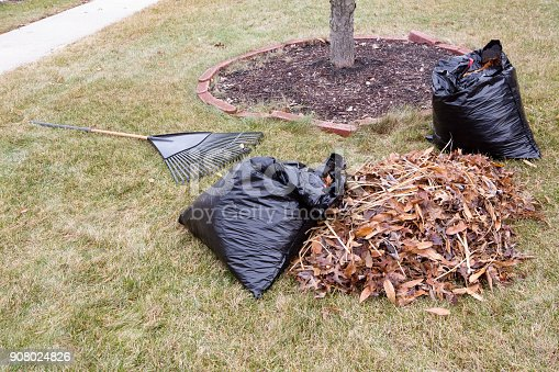 istock Raked pile of dried autumn leaves in a garden 908024826