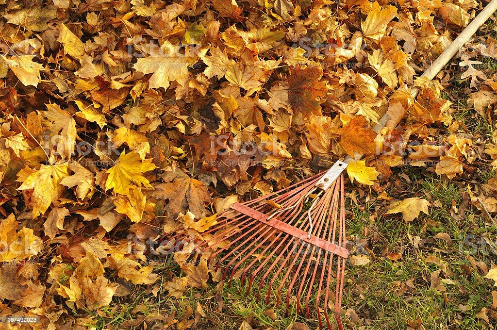 Rakin leaves royalty-free stock photo
