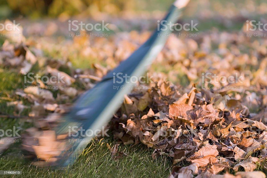 Raking Autumn Leaves royalty-free stock photo